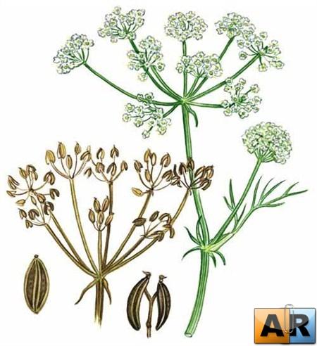 Квашення лікувальних трав і рослин